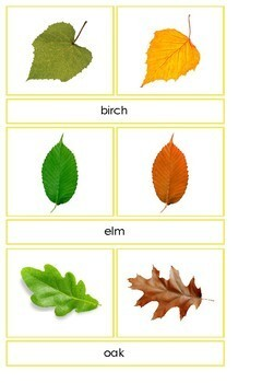 Spring and Autumn leaves matching cards