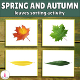 Spring and Fall Leaves Matching Cards