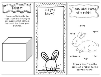 Pet Rabbits Research, Writing, and Technology: Interactive Brochure