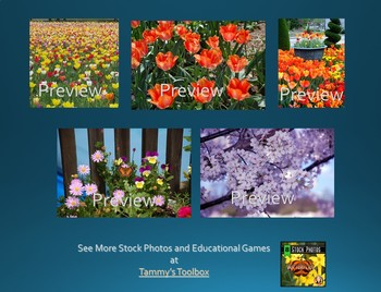 Spring and Easter Stock Photos - Tulips, Easter Eggs, Cherry Blossoms