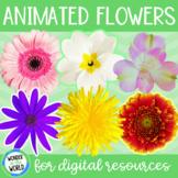 Animated spring summer flower GIFs for digital resources set 2