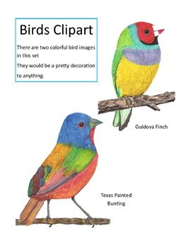 Watercolor Bird Clipart (Watercolor Whimsy)