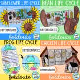 Spring lifecycles foldout activity for interactive science
