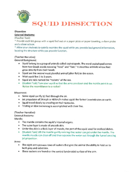 Squid Dissection Eco Friendly
