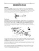 Squid Dissection - Invertebrate Anatomy