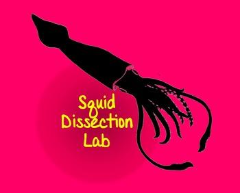 Squid Dissection Lab