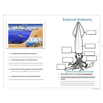 Squid Dissection Mini-Lesson