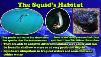 Squids - Powerpoint