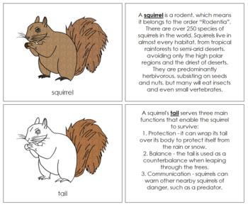 Squirrel Nomenclature Book