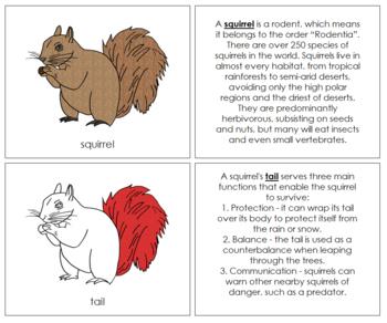 Squirrel Nomenclature Book - Red