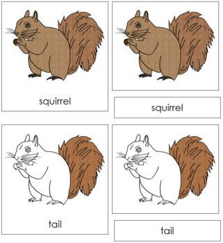 Squirrel Nomenclature Cards