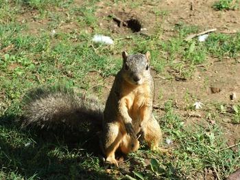 Squirrel Pose 1