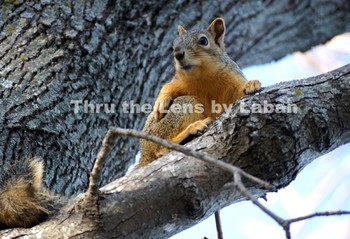 Squirrel Relaxing in a Tree Stock Photo #138