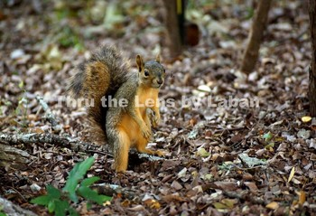 Squirrel Stock Photo #143