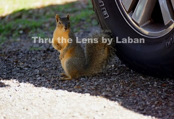 Squirrel in the Shade Stock Photo #144