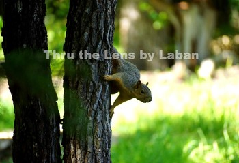 Squirrel on Tree Stock Photo #90