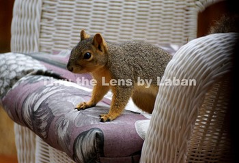 Squirrel on a Chair Stock Photo #43