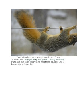 Squirrels Reading and Comprehension Questions
