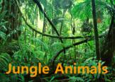 Jungle Animals Presentation - Grades K-1 - PowerPoint