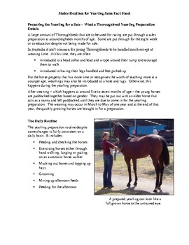 Stable Routines: Yearling Sales Preparation Activity