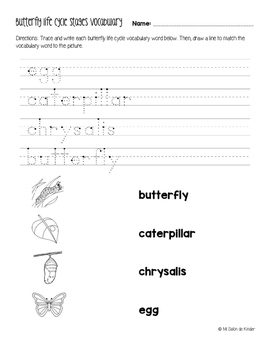 Stages in the Life Cycle of a Butterfly Freebie