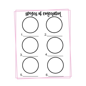 Stages of Conception Coloring/Labeling Worksheet