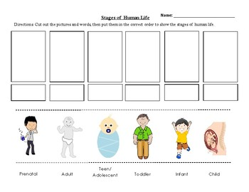 Stages of Human Life - Cut and Paste Activity