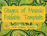 Stages of Meiosis Foldable