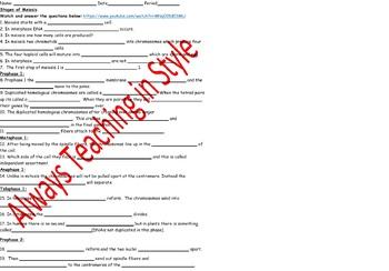 Stages of Meiosis Video Worksheet