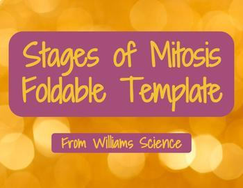 Stages of Mitosis Foldable