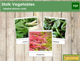 Stalk Vegetable Picture Cards
