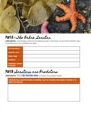 Starfish as Keystone Species - Digital / Google Docs