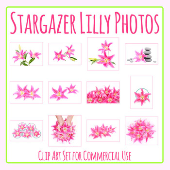 Stargazer Lilies - Pink Lily Flowers on White Photos / Photograph Clip Art