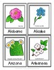 State Flower Cards