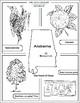 State Symbols Color-me Pages