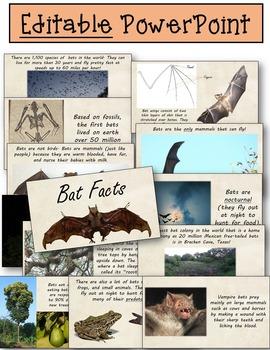 Stellaluna Book Study Bats Interactive Notebooks Printables, Editable PowerPoint