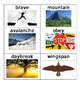 Stellaluna Vocabulary cards