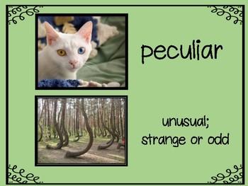 Stellaluna, by Janell Cannon:  Vocabulary Study