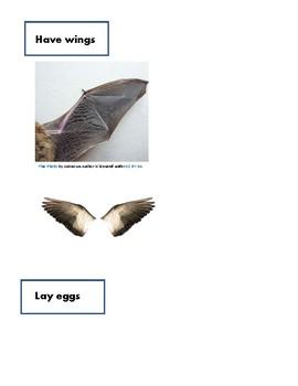 Stellaluna compare birds and bats venn diagram