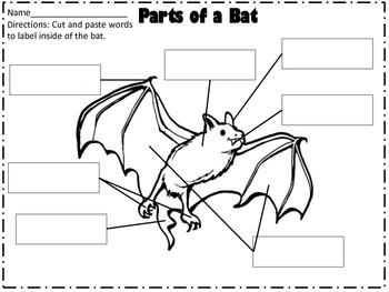 Stellaluna Bat Literacy and Science Unit