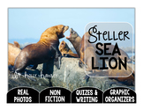 Steller Sea Lion-A Research Project