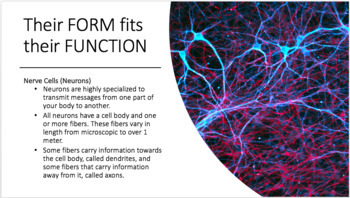 Stem Cell and Cell Differentiation PPT