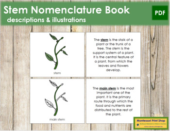Stem Nomenclature Book
