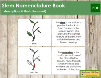 Stem Nomenclature Book (Red)