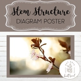 Plant Stem Structure Poster