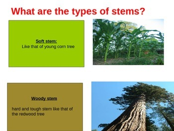 Stem structure and function