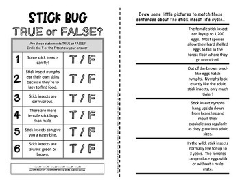 Stick Insects {Fun & facts about Walking-Sticks, Stick-Bugs & Phasmids}