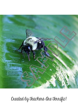 Stinging Insects Stock Photos
