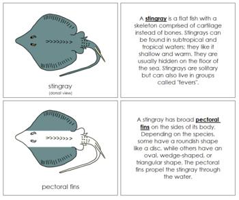 Stingray Nomenclature Book