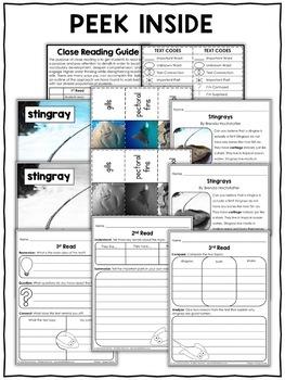 Stingray Close Reading Passage Activities